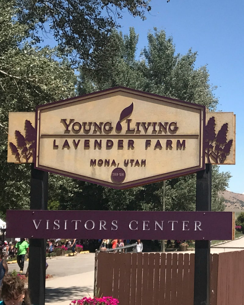 Young Living Lavender Farm in Mona Utah.
