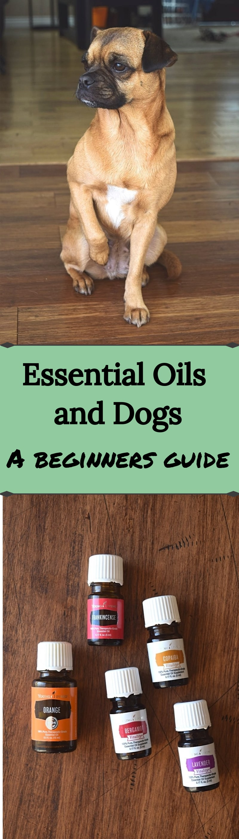 Essential Oils And Dogs A Beginners Guide A Stray Kitchen